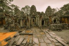 De reuzeboom die Ta Prom en de tempel van Angkor Wat, Siem behandelen oogst, Ca royalty-vrije stock foto's