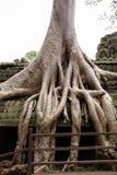 De reuzeboomwortels die de tempel van Ta Prom in Siem behandelen oogsten, Kambodja stock foto's