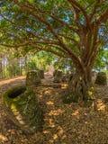 De reuzekruiken van de Ijzertijdperksteen in beboste open plek Xiangkhoangplateau, stock foto