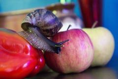De reuzeslak kruipt van Apple aan paprika royalty-vrije stock afbeeldingen