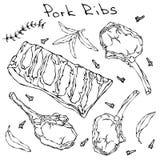De Ribben en de Kruiden van het rijvarkensvlees Realistische Vectorillustratie Geïsoleerde Hand Getrokken Krabbel of Beeldverhaal Stock Foto