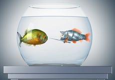De ridder en de piranha van de goudvis Stock Afbeeldingen