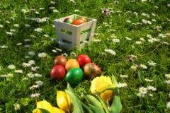 De rieten mand van Pasen met eieren en tulpen op vers gras en madeliefjes in een zonnige de lentedag Royalty-vrije Stock Foto