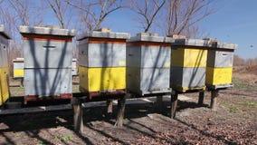 De rij van bijenkorven op houten pijlers hief omhoog op, bijenstal, Bijenlandbouwbedrijf stock videobeelden