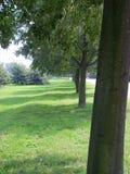 De rij van bomen Stock Afbeelding