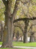 De rij van bomen Stock Afbeeldingen
