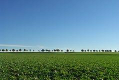 De rij van bomen op horizon. Royalty-vrije Stock Afbeeldingen