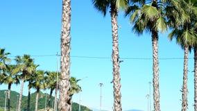 De rij van lange palmen tegen een blauwe hemel, zachte nadruk, vertroebelde achtergrond stock footage
