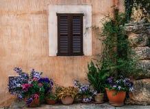 De rij van potten met gekleurde bloemen op een steenmuur met shuttered vensterachtergrond Royalty-vrije Stock Afbeeldingen