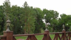 De rijbomen van het de zomerlandschap tegen de achtergrond van stock video