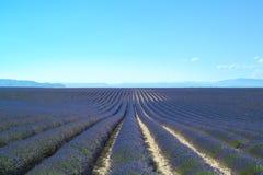 De rijen van de bloemgebieden van de lavendel. Valensole de Provence Stock Afbeeldingen