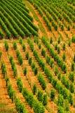 De rijen van de wijngaard, Sancerre, Frankrijk Stock Foto