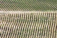 De rijen van een grote wijngaard Royalty-vrije Stock Afbeeldingen