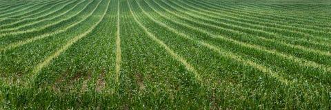De Rijen van het Gebied van het graan royalty-vrije stock afbeeldingen