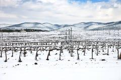 De rijen van wijngaarden die door sneeuw in de winter worden behandeld. Chianti, Florence, Italië royalty-vrije stock afbeeldingen