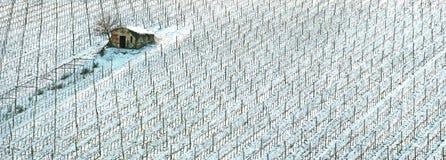 De rijen van wijngaarden door sneeuw in de winter worden behandeld die. Chianti, Florence, Ita stock foto's