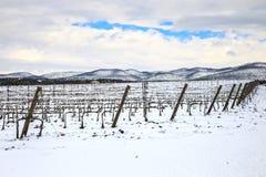De rijen van wijngaarden door sneeuw in de winter worden behandeld die Chianti, Florence, Ita royalty-vrije stock fotografie