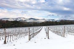 De rijen van wijngaarden door sneeuw in de winter worden behandeld die. Chianti, Florence, Italië stock afbeelding