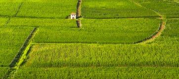 De rijenpanorama van Langhewijngaarden, Barolo, Piemonte, Italië Europa royalty-vrije stock afbeeldingen
