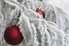 De rijp van de de wintervakantie Stock Afbeelding