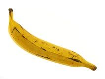 De rijpe banaan van de Weegbree Stock Afbeeldingen