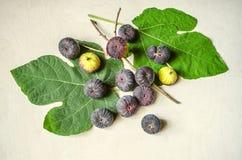 De rijpe donkere purpere bessen van fig. liggen op vijgebladen Royalty-vrije Stock Afbeelding