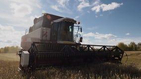 De rijpe haver bij landbouwgebied met industrieel landbouwbedrijf maaidorser stock footage