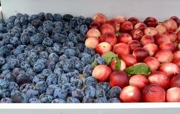 De rijpe pruimen en de nectarines liggen op een marktteller Royalty-vrije Stock Foto's