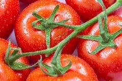 De rijpe tomaten met water laat vallen 8 Stock Foto