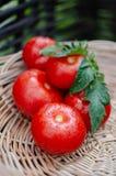 De rijpe tomaten zijn in een rieten mand stock foto
