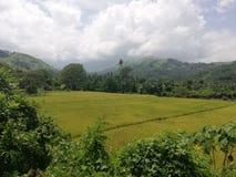 De rijst fileds sourrounded door tropische vegetatie en heuvels op Mindoro, Filippijnen royalty-vrije stock fotografie