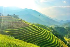 De rijst refiled, Vietnam Royalty-vrije Stock Fotografie