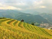 De rijst refiled, Vietnam Royalty-vrije Stock Foto's