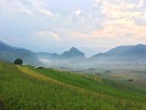 De rijst refiled, Vietnam Stock Afbeelding