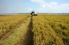 De rijst van de landbouwersoogst langs maaidorser royalty-vrije stock fotografie