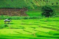 De rijst van het plattelandshuisjeterras Royalty-vrije Stock Afbeeldingen