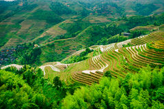 De Rijstterrassen van de Yaoshanberg stock foto's