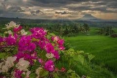 De rijstterrassen van Jatiluwih op een bewolkte ochtend royalty-vrije stock foto