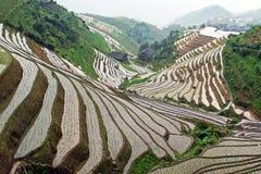 De rijstterrassen van Longji Stock Fotografie