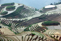 De rijstterrassen van Longji, China Stock Afbeelding