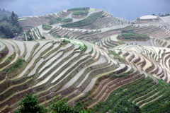 De rijstterrassen van Longji, provincie Guangxi Stock Fotografie