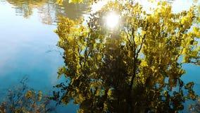 De rimpelingen op het water, worden bomen overdacht een zonnige daling, camerabeweging stock videobeelden