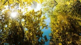 De rimpelingen op het water, worden gele bomen weerspiegeld in het meer op een warme zonnige dag stock footage