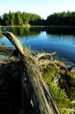 De Rimpelingen van het meer Stock Foto