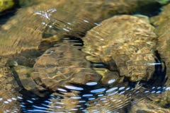 De rimpelingen vormen een patroon op de oppervlakte van zoet water over rots royalty-vrije stock afbeelding