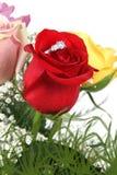 De ring in bloemblaadjes van rood nam toe royalty-vrije stock afbeelding