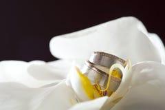 De ringen die van de gouden bruiloft op witte orchidee leggen Stock Afbeeldingen