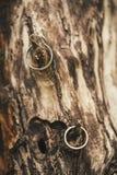 De ringen hangen op de boom Royalty-vrije Stock Foto's