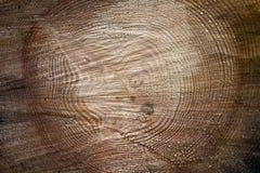 De Ringen van de boom Stock Afbeelding