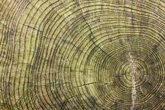 De ringen van de boom Royalty-vrije Stock Afbeelding